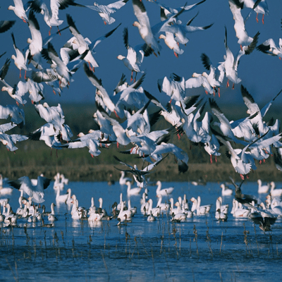 Alzyma Biodiversité oiseaux