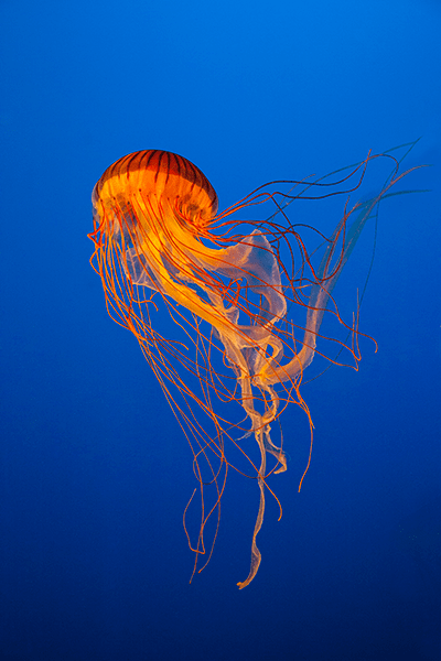 meduse biodiversite page contact
