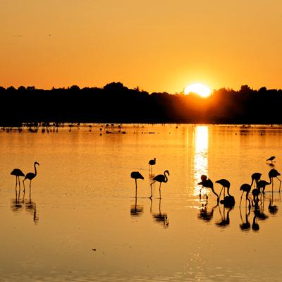 sport nature et biodiversite oiseau