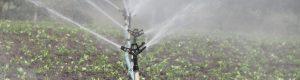 Comment relever le défi de l'eau dans l'agriculture ?
